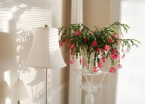 不怕冷的大型室内植物图片