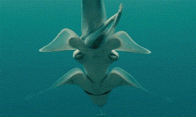 海洋深处的怪鱼,长着一双翅膀,还有两只脚是什么