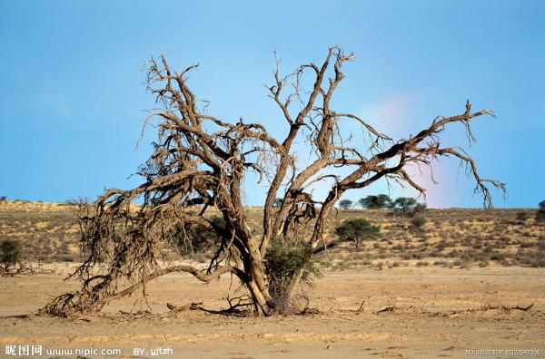没有树会怎样_枯萎的树怎么画_百度知道