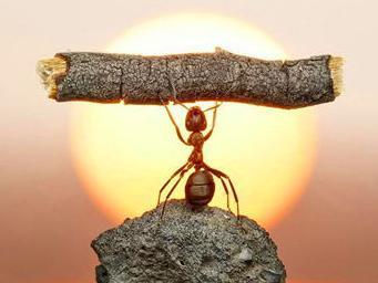 疯狂猜成语蚂蚁扛树枝_疯狂猜成语蚂蚁扛树枝什么成语