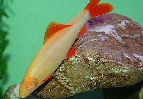 前面雌性臀鳍矩形 水族资讯 南昌水族馆第2张