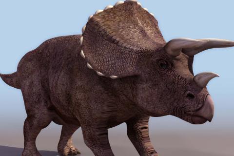 恐龙的资料50字_恐龙的资料50字_百度知道