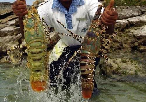 非洲人为什么任由螃蟹和大龙虾疯长?