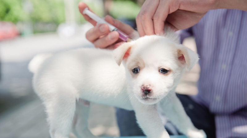 百科新说:真的告别狂犬病?