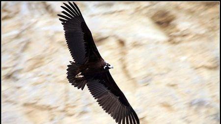 迁徙季节,教你拍摄身边的野生动物