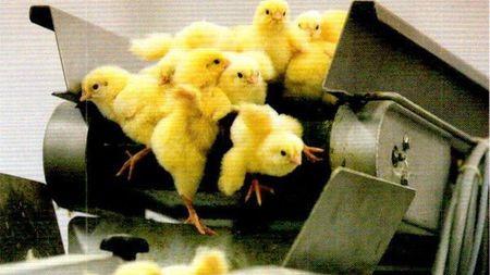 炸鸡块为何成为现代社会的象征?