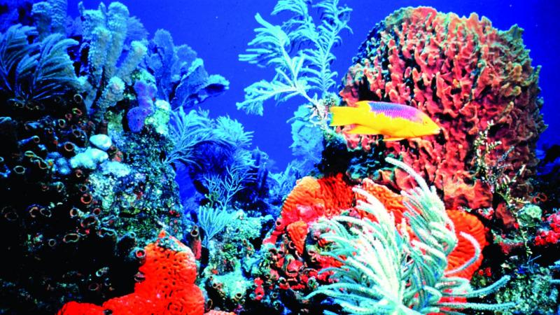 """潜伏海底的生命""""异族""""!"""