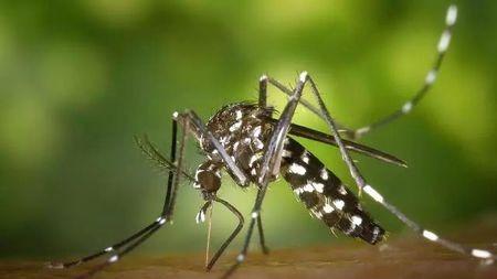 """科学家通过转基因真菌,有望彻底将传播疟疾的蚊子""""灭种?#20445;?#30340;头图"""