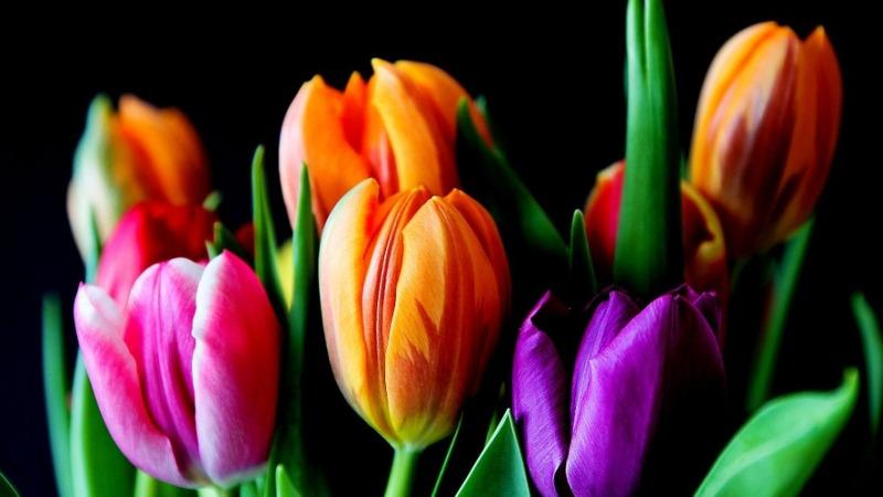 基因编辑技术能让我们看到更加鲜艳的花朵的头图