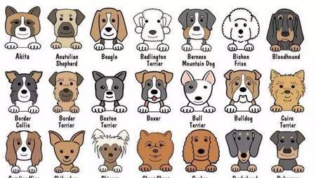 为什么狗脸有很多种,猫脸就那么几种?