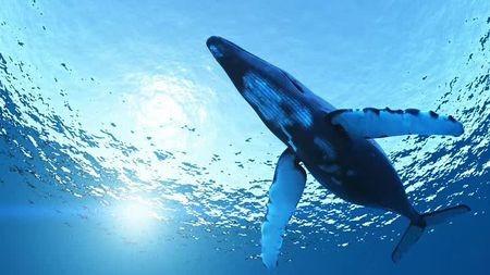 蓝鲸是地球上最大的动物,为什么能长这么大?