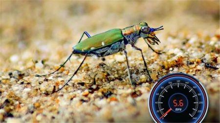 唯快不破,世界上跑得最快的动物的头图