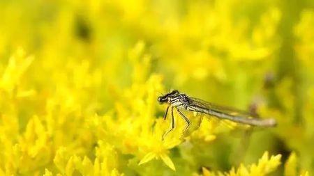 德国飞虫数量骤减,与27年前相比数量少了四分之三