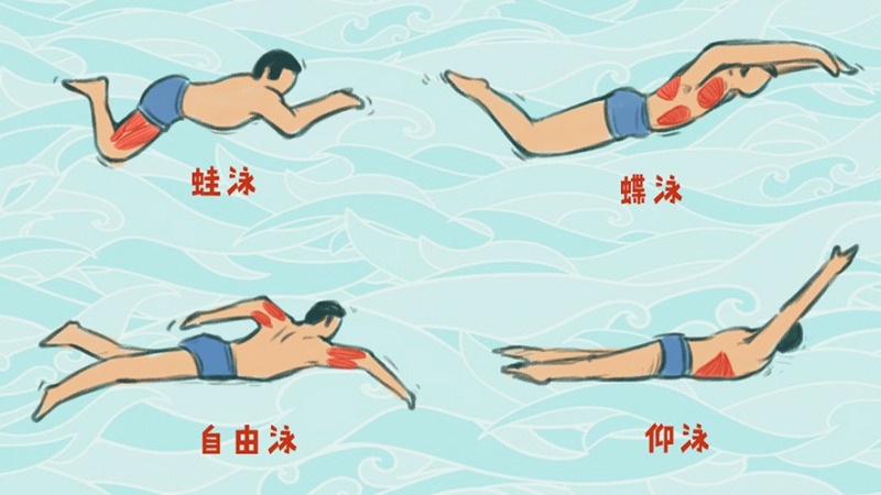 科学分析给你看,游泳真的比跑步更减肥