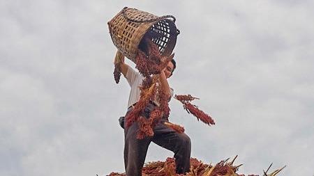 酿酒工具——白酒酿造的原料和辅料---粮食与稻壳