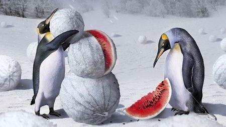 为什么北极没有北极企鹅,南极没有南极熊?