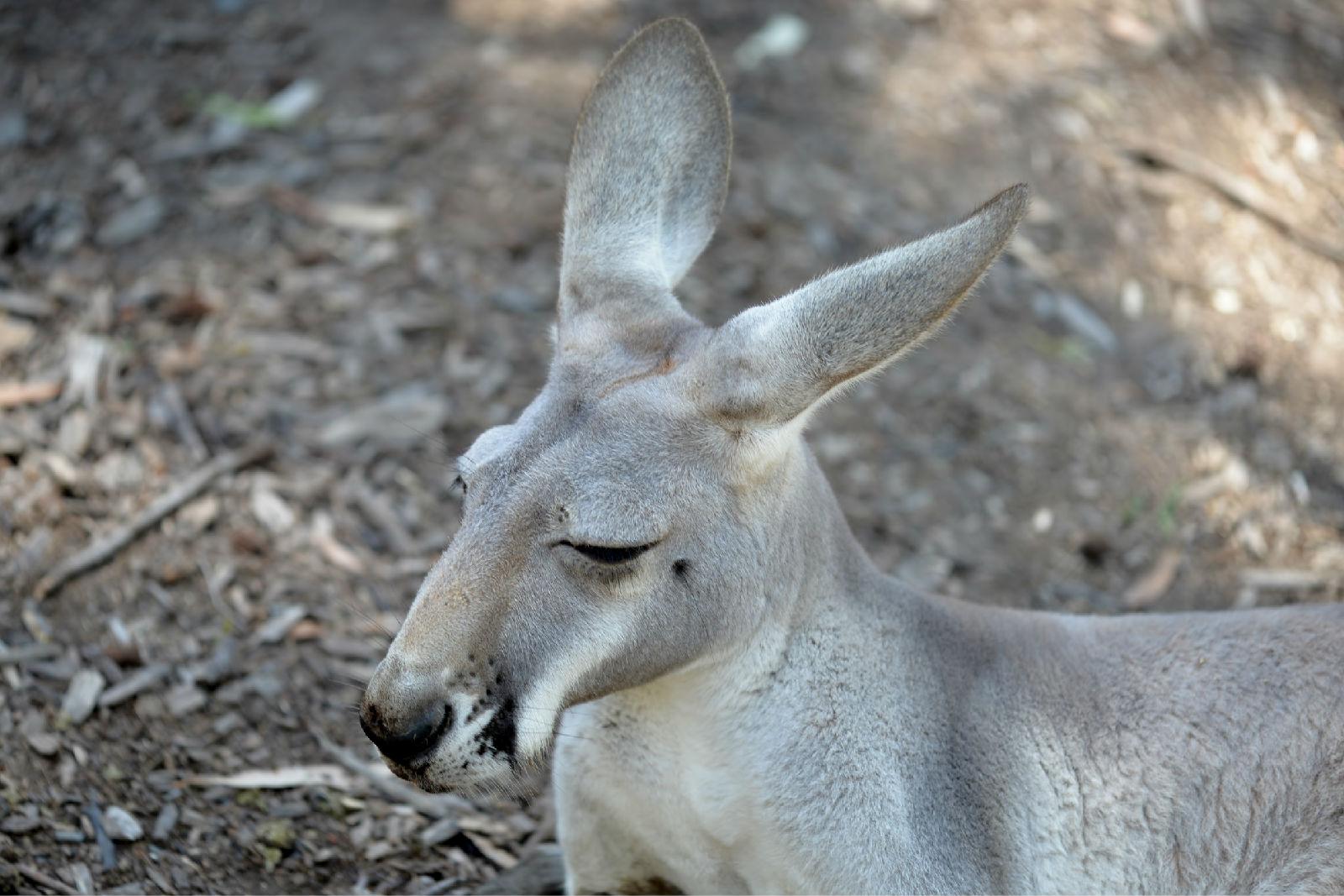 澳大利亚旅游攻略图片53