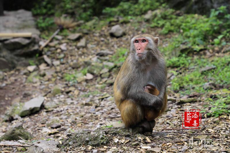 衢州旅游攻略图片41