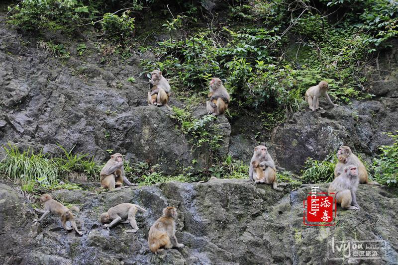 衢州旅游攻略图片39