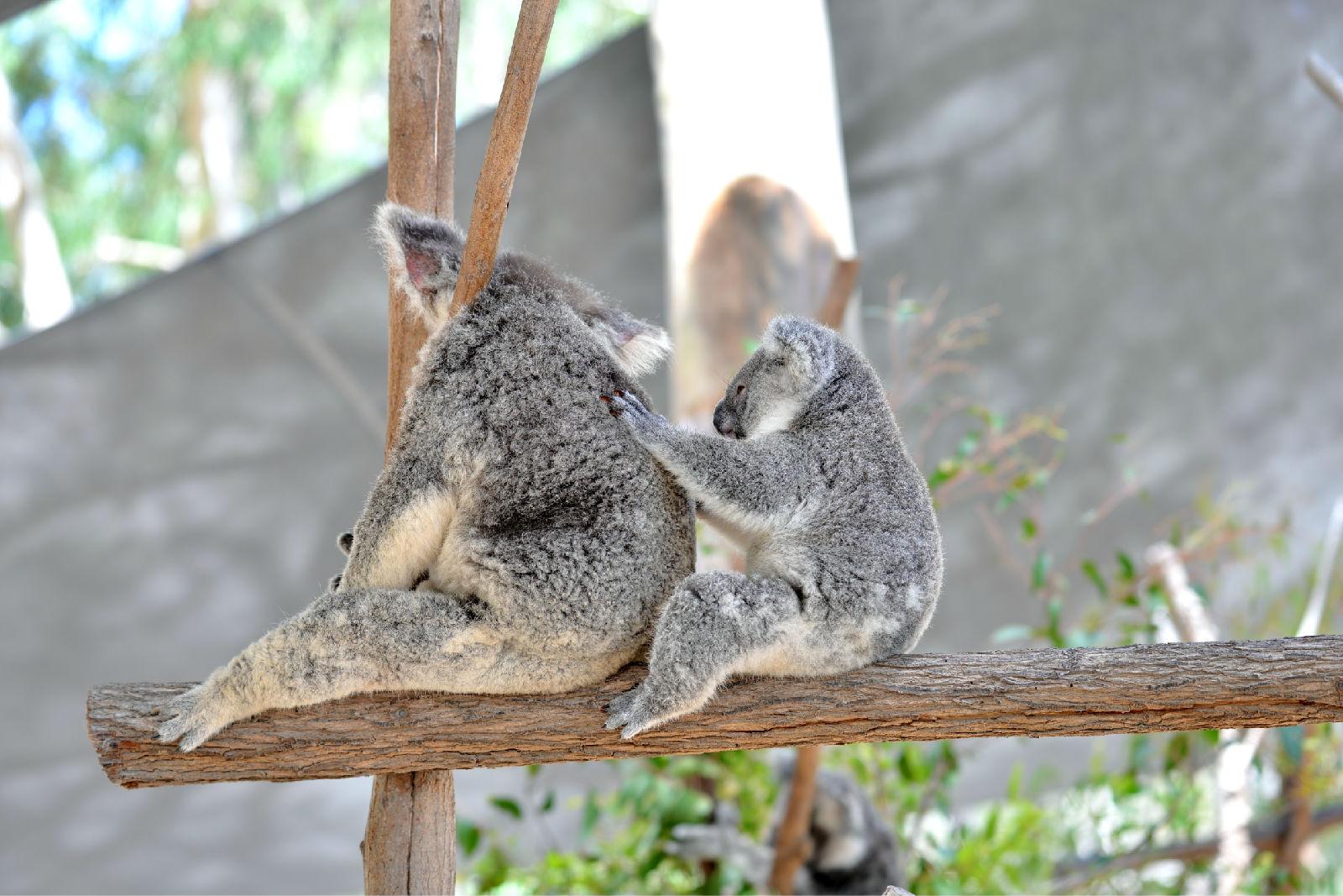 澳大利亚旅游攻略图片37
