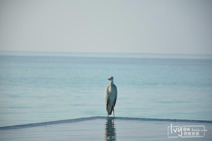 马尔代夫港丽岛旅游攻略图片30