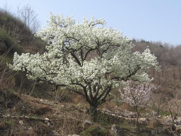 天津蓟县旅游攻略图片25