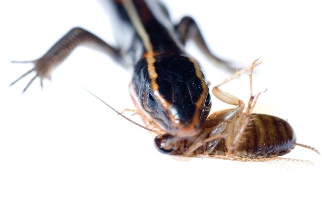 家里很多老鼠怎么办_下班回家在厨房发现有蟑螂,怎么办?
