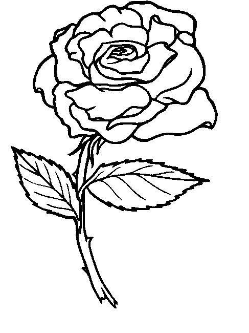 玫瑰花简笔画图片欣赏