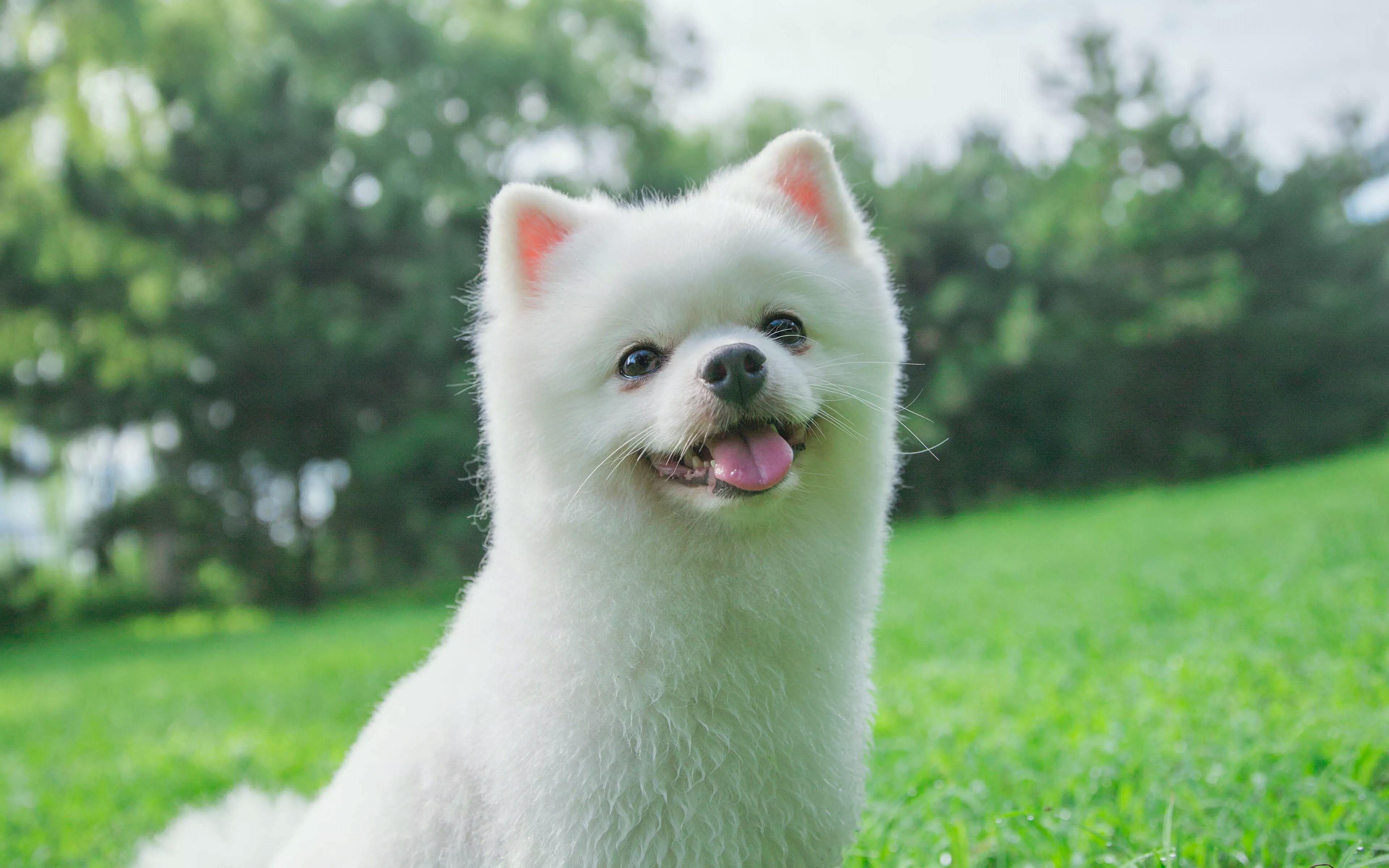 小狗狗宠物_宠物狗图片_百度知道