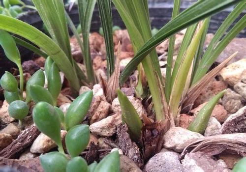 兰草怎么养_兰花怎么养,兰花的种植方法及栽培技巧_百度知道