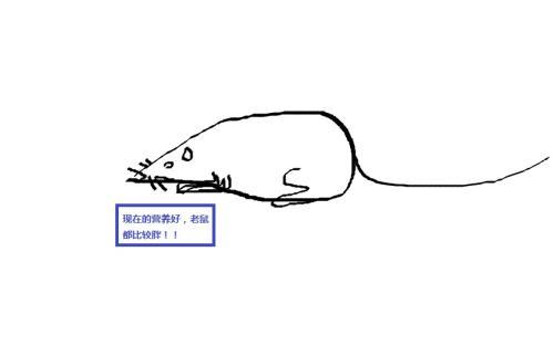 生肖鼠怎么画