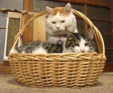猫防鼠害文言文