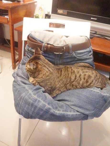 深度依赖_为什么猫猫喜欢趴在人身上睡觉_百度知道