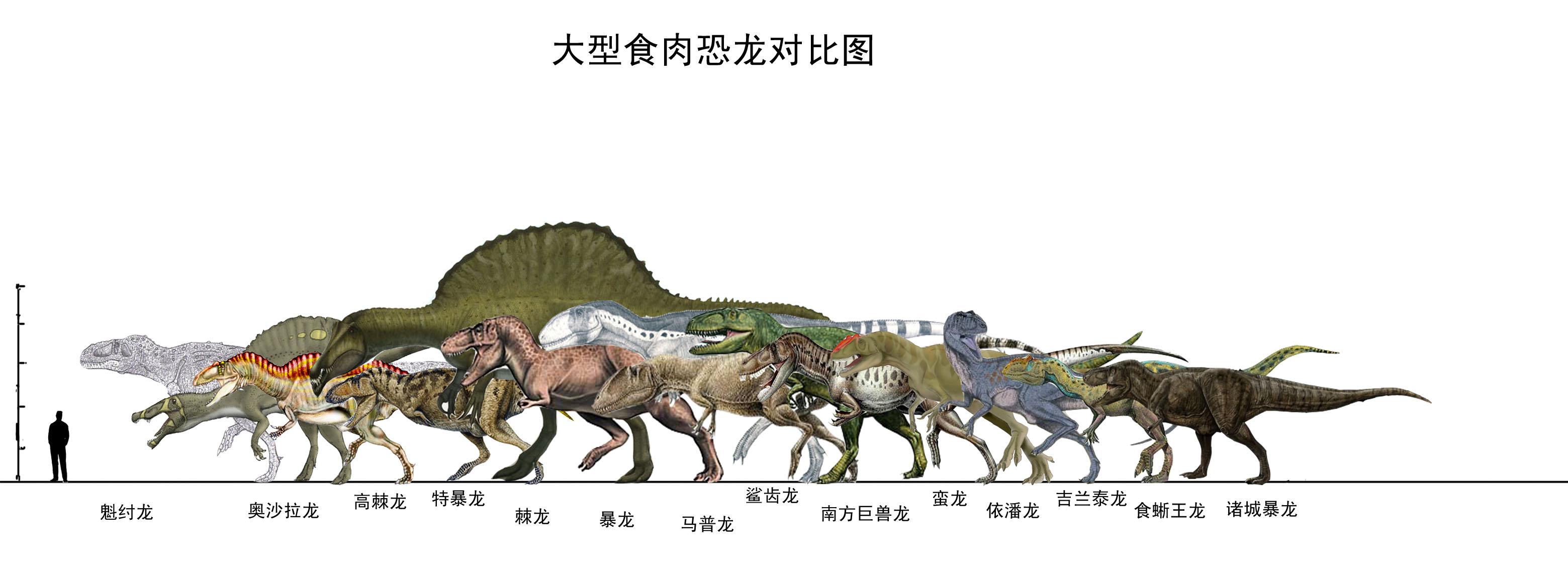恐龙的资料50字_食肉恐龙有哪些图片_百度知道
