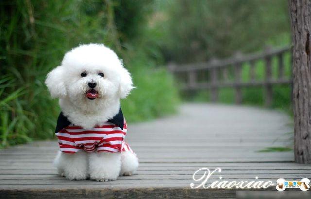 这只狗狗是什么品种 叫什么名字啊