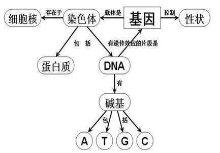人类基因组物理图谱