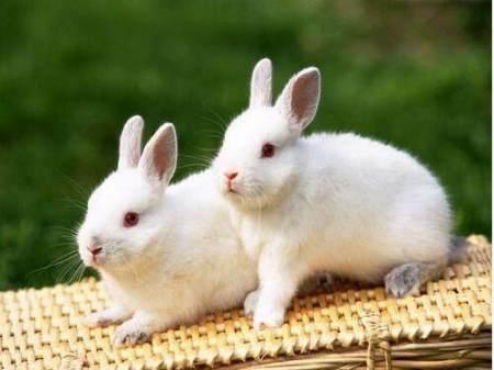兔子上厕所我们该怎么训练