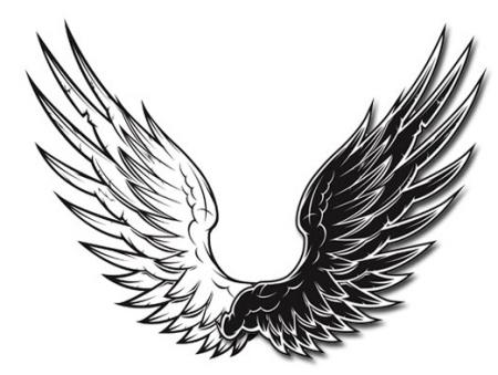 孩子羽翼丰满_求一个关于翅膀或羽翼的头像(黑白的)