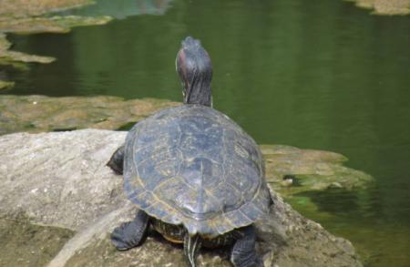 乌龟诗词 赞美乌龟的诗句