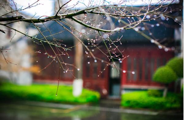 早春描写槐树诗词 描写早春的诗词