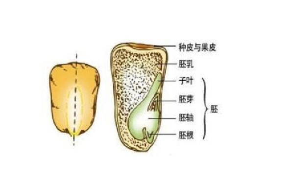 果实和种子有什么区别插图(1)