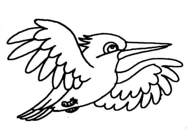 这是什么鸟