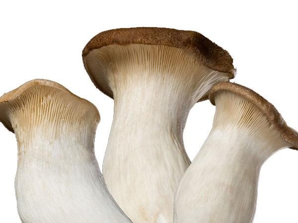 蘑菇的种类_常见的可以吃的蘑菇图片_百度知道