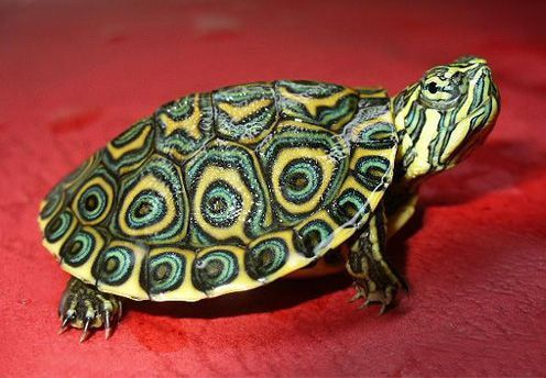 龟壳的色泽与乌龟的健康有关吗?