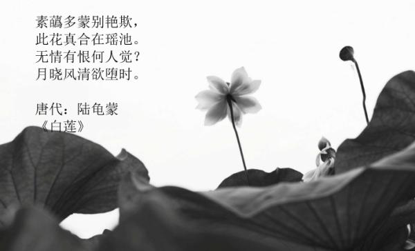 带艳字好的诗词,带有艳字的诗句