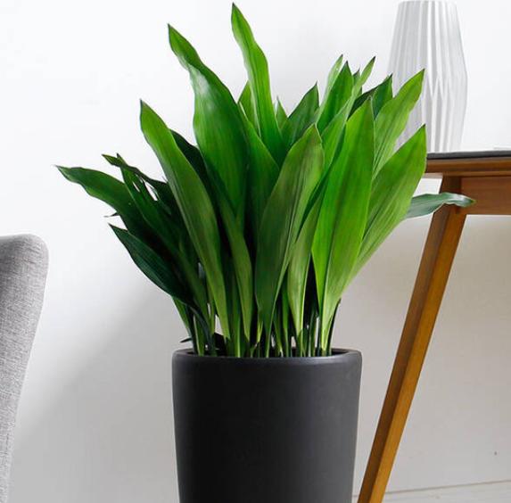 什么花适合在室内养_适合室外养的大型盆栽植物有什么?_百度知道