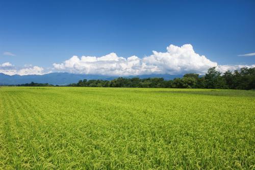 1公顷等于1万平方米_请问一亩地等于多少平方米?_百度知道
