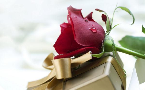 关于玫瑰花的诗词 求描写玫瑰花的古代诗句