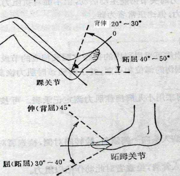 背部结构_解剖学的屈和伸是什么样的动作?脚掌的屈和伸是怎样的动作