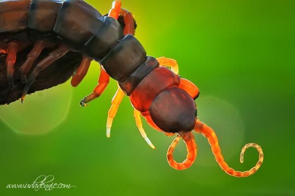 么虫子 是不是蚰蜒